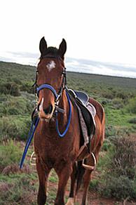 Kango Horse Trails – Klein Karoo