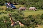 NYARU GAME LODGE – Garden Route Safaris